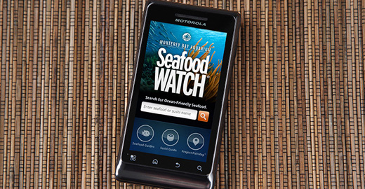 National Park Service Will Use Seafood Watch to Guide Sustainable Purchases