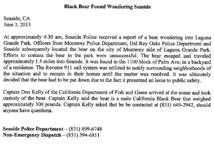 Black Bear Put Down in Seaside