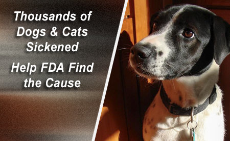 FDA Wants to Know Why Are Jerky Treats Making Pets Sick?