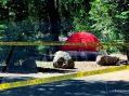 Update on Watsonville Man Shot at Deadman Campground in Sierra High Country